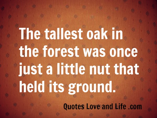 inspirational-quotes-the-tallest-oak-in-the-forest