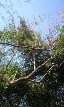 species of tree